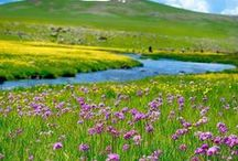 bahar-spring-doga-huzur-nature / 2012 pintereste katildim
