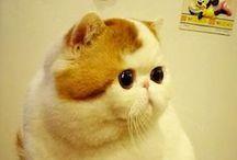 kedi ne güzel sey-cute cat-ciciiiiiii