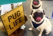 we love dogs / explore our pet friendly city & shop natural dog products.