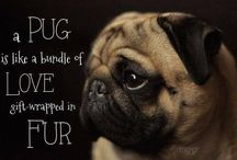 Pets and Pugs / by Dawn DeBois
