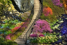 Staircases  / by Jodi Cunningham