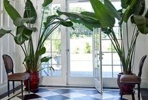 Greenery - Groen / Interieurontwerp | interieuradvies | nieuw interieur | kleurenplan | kleurcombinaties | plattegrond |  3d-visualisaties | interieurontwerper | interieurarchitectuur | interieurarchitect | verhuizing | verhuizen | woonideeen | Groen in huis |Planten