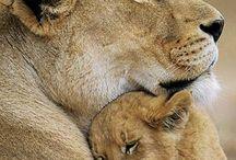 Photography - Animals / Interesting Animals