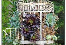 Plants & Planters / by Jodi Cunningham