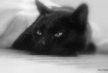 ♡ Bianca fotografeert : dieren