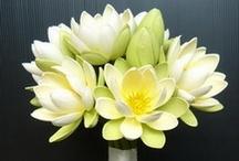 Blooms / by Jackie