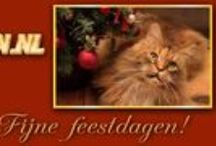 Banners Mainecoon.nl / All the banners are made by Monique Beekmans #FelineFantasy