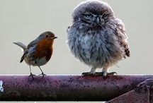 Feathered Friends / by Betty Milby