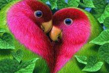 ARTE IN NATURA / i colori degli animali e dei vegetali