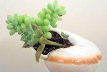 Kiskert csigaházban/Miniature snail shell gardens