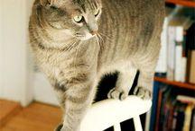 Cat lady!! / I'm not a crazy cat lady.. I think