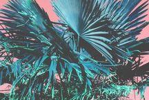 Tropicool / 2015 is Tropical!