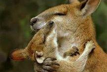 05. Marsupials / by Rosie