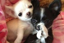 Sweety Puppy!