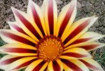 Florile mele / Plante,flori