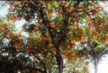 // ORANGE // / The color orange
