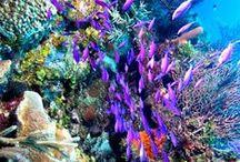 underwater world / the beauty of the underwater world