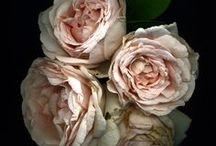 Meer met bloemen