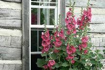 Fleurs et jardins