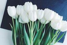 Flowers & Posies / Pretty flowers ♥