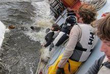 Extreme Sail & Sailboats / by Patricia Sanchez Breton