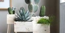 Plant styling / How to style house plants to add some botanical magic to your home decor, plus ideas and tips for getting started for the less green fingered among us.