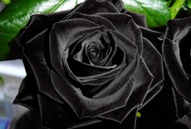 Flores / by Kings of the Dark Forest