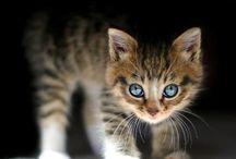Animals / Pictures of animals :)