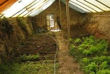 Growing food/garden / by Toto Oz