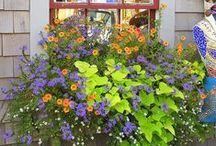 window boxes | Blumentöpfe im Fenster | bloembakken in de vensterbank