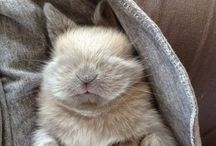 Bunnys ❤️