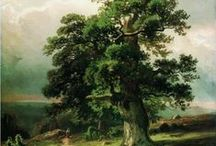 Дуб, желуди / Oak tree