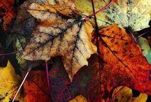 Autumn x