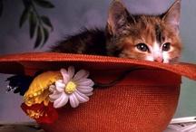 •Cat In The Hat