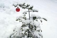 ☃ 'O Tannenbaum' / Christmas trees