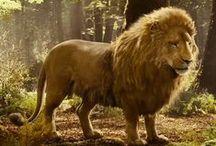 •Aslan / lions