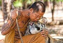 ✈Thailand & Cambodia /