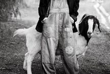 •Green Acres / pigs, ducks & geese, sheep & goats, donkeys & mules (if I ever live on a farm again I want a few of each)