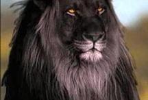 Black - Animals & Reptiles / Beautiful Black Animals & Reptiles