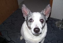 ☺ BAILEY ♥ ♥ ♥ / We had unconditional love for 15 years (he was so loved & is much missed)