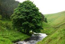 ✿ Tree Hugger / all manner of forestry