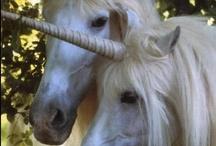 Unicorns / photos of real Unicorns:)