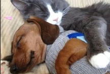 "Snuggle / Photos that make you say ""awwww."""