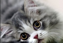 """Kitty Overload / I just can't help it! These kitty photos just make me say """"awwww."""""""