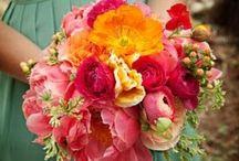 florals / Blooms, blossoms..