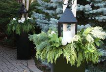 Plants- Outdoor Winter Pots