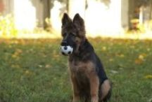 Psie przedszkole / zajęcia dla szczeniaków do 6 miesiąca życia.