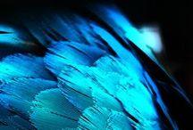 Blue, Blue, Electric Blue