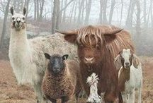 SHEEPs&ALPACAs