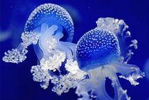 Jellyfish 海☽月